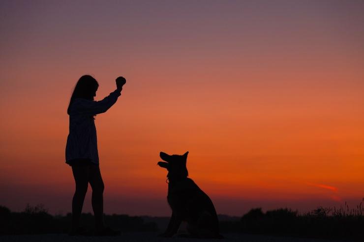 dog love signals