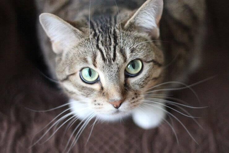 cat home hygiene
