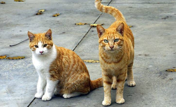 fifteen cats reported missing