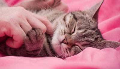 caresses cat
