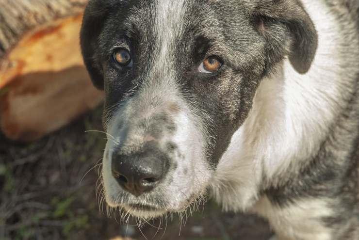 mistreatment on dog animals
