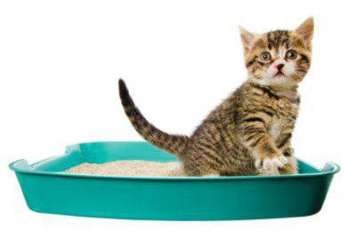 proteinuria in cats