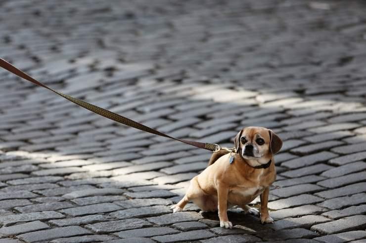 avoid dog leash risks