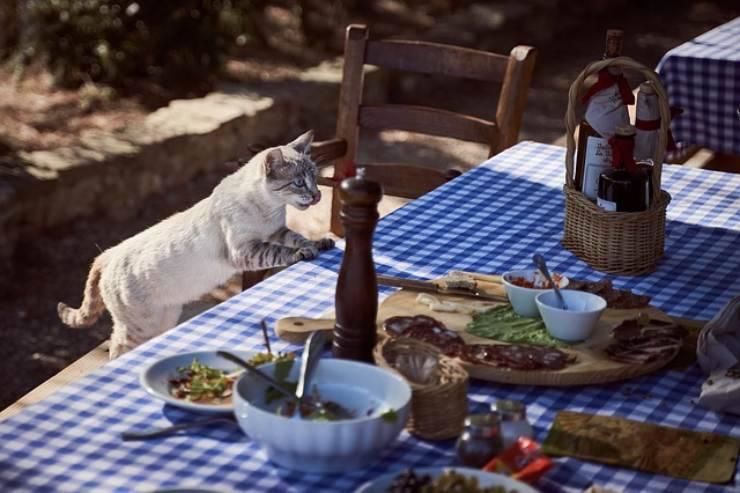 harmful cat food
