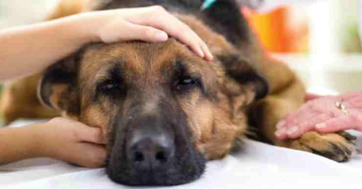 Sick dog pampered Facebook