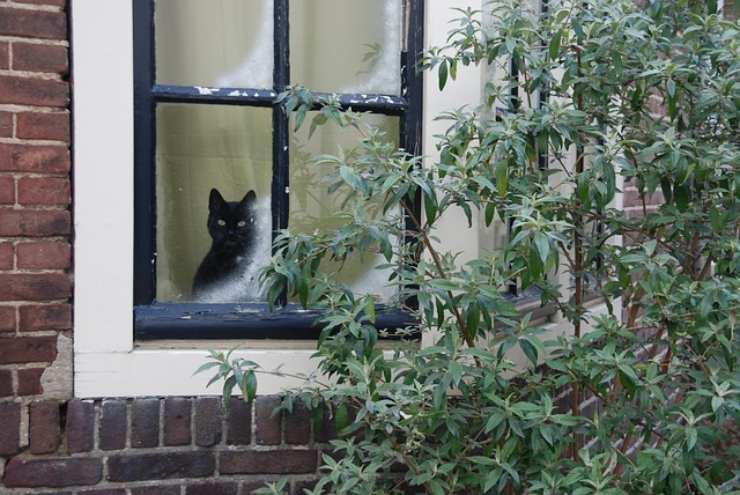 cat wait