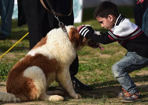 A Pakistani boy pats his dog at a
