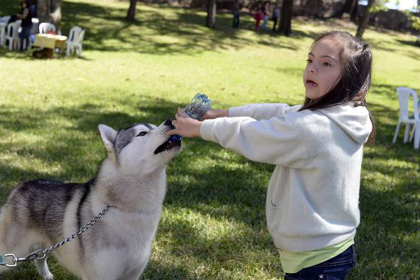 A girl plays with a Husky dog ​​during an international dog show in Guatemala City on January 25, 2015. AFP PHOTO / Johan ORDONEZ (Photo credit should read JOHAN ORDONEZ / AFP / Getty Images)