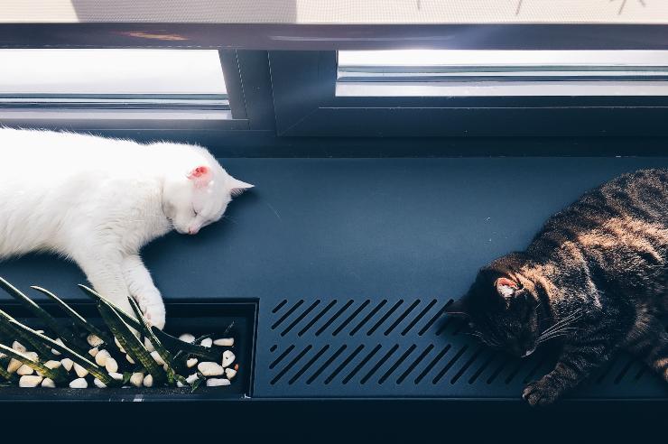 Male or female cat