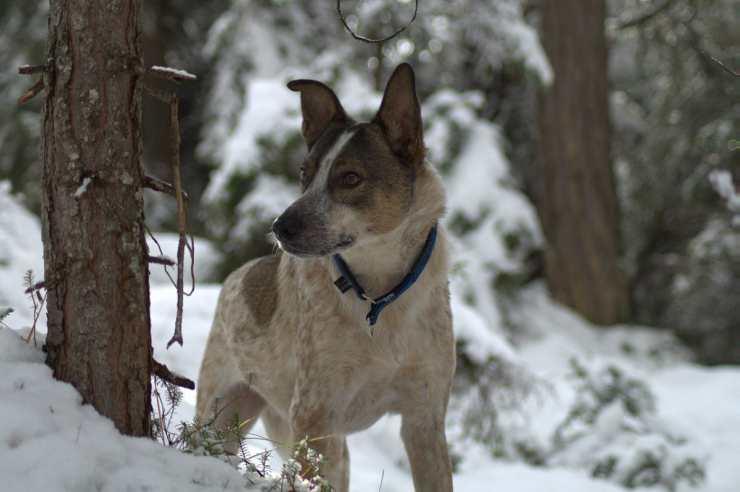 Doggie in the snow (Pixabay Photo)