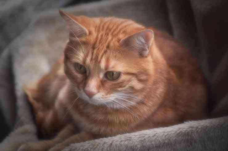 Pensive cat (Pixabay photo)