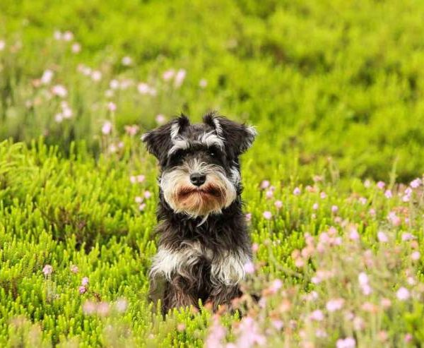 5 Things dogs and cats are to stay away from