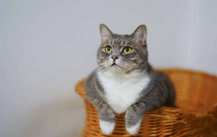 cat language sounds