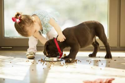 Cute little girl feeding her puppy