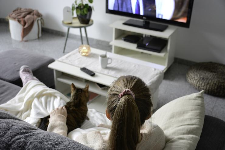 cats can watch TV