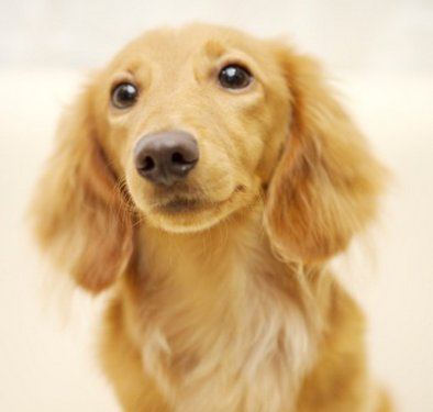 Canine parvovirus: symptoms, causes, therapy and prevention