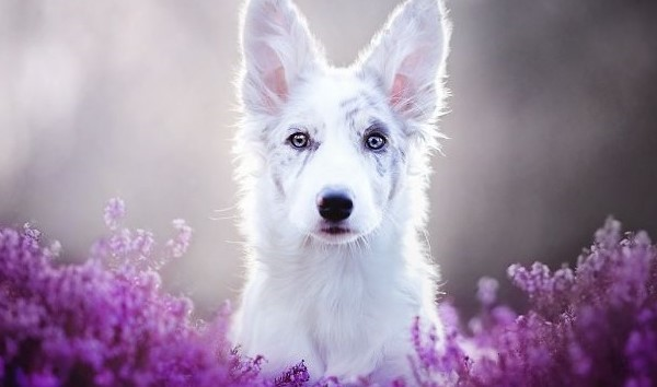Cardiac arrhythmias in dogs - Animal health