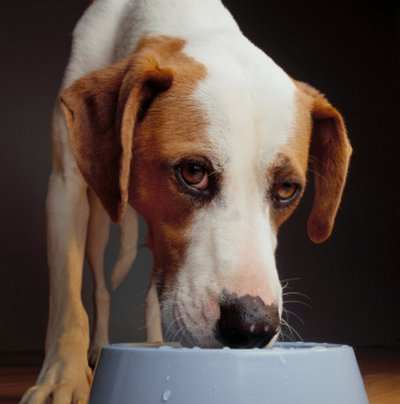 Cushing syndrome in dogs: causes, symptoms and treatment