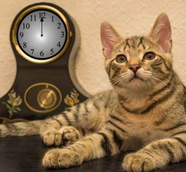 Do cats have a perception of time? What the experts say