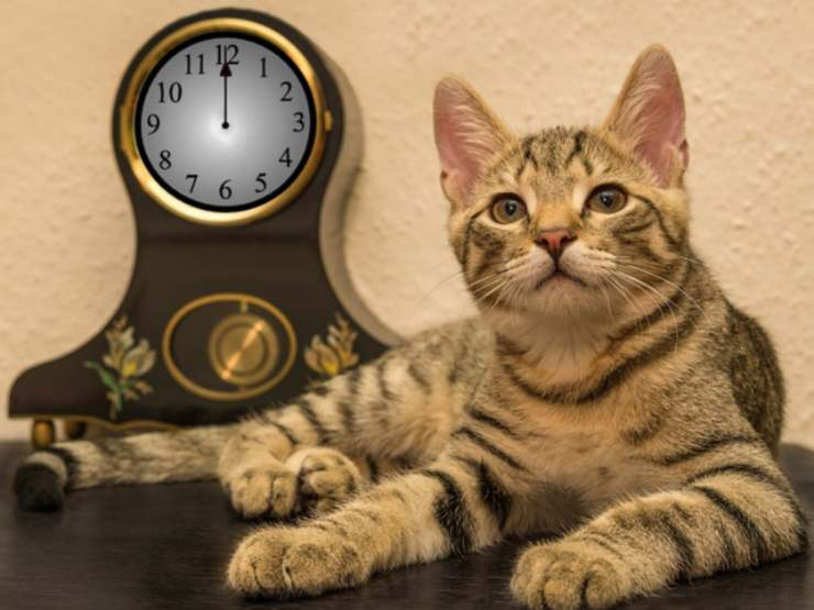 cats have the perception of time
