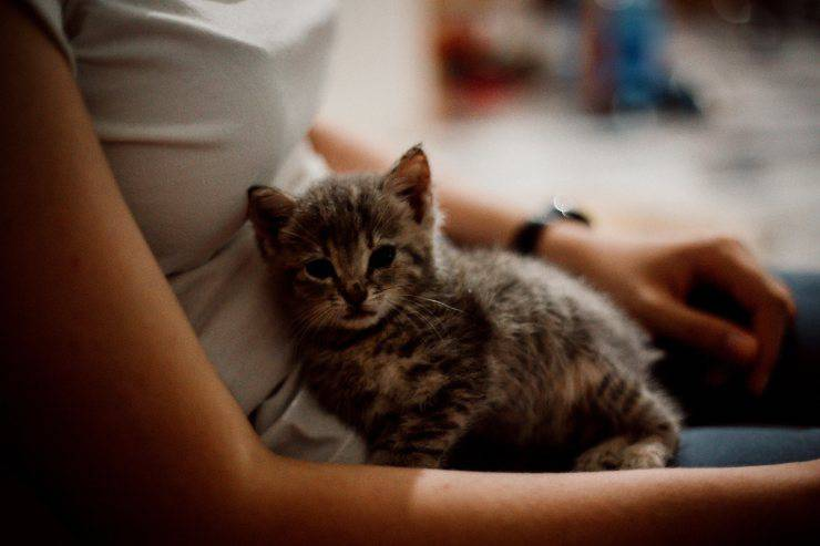 kitten nutrients