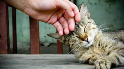 How and when to pet a cat