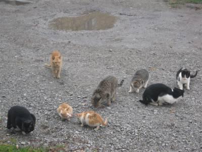ROAD CATS