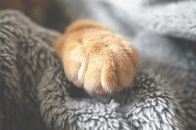 cat paws clean
