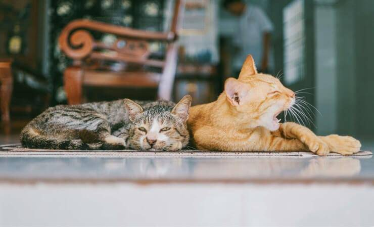 cats relax yawn