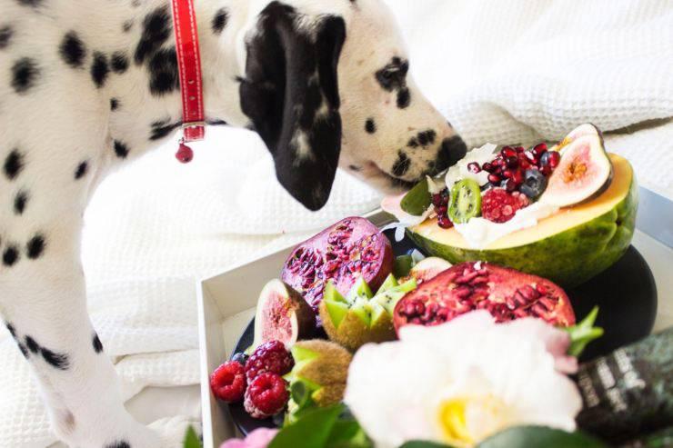 dalmatian dog fruit