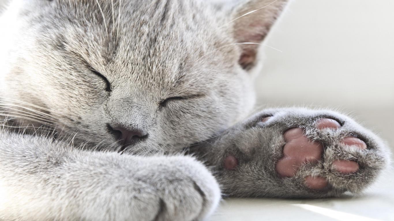 Kedilerin Kısırlaştırılması ile İlgili Bilmeniz Gerekenler