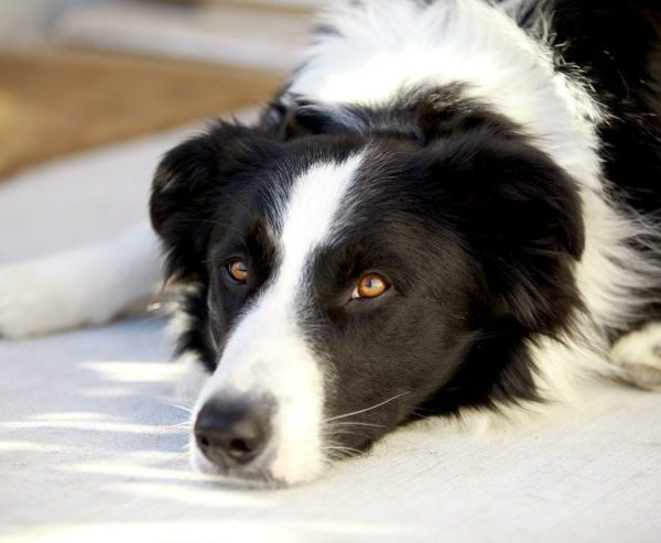 Top 10 Mistake That may Kill your Dog (Dog Care)