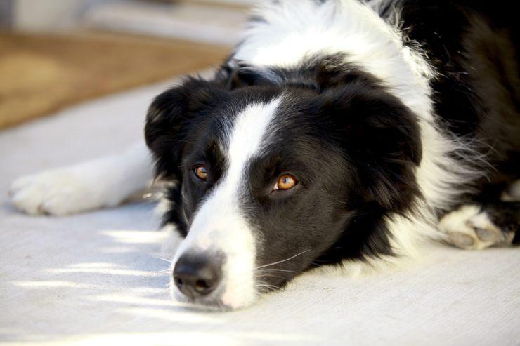 errors in dog care