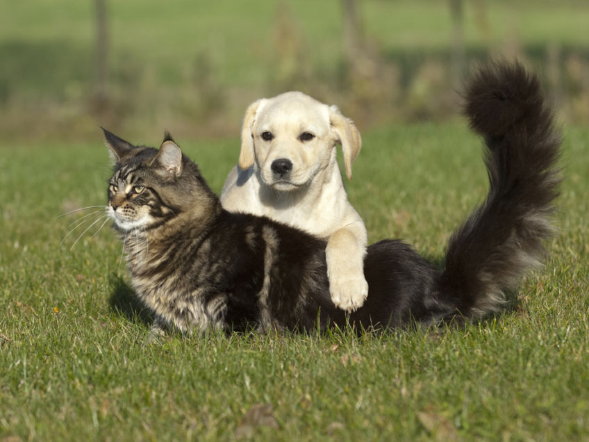"""My dog """"rapes"""" the cat! Minor mistake or serious problem?"""