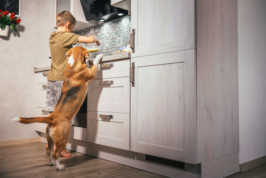 boy with a dog in the kitchen