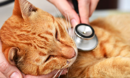 The 6 most common cat health problems -