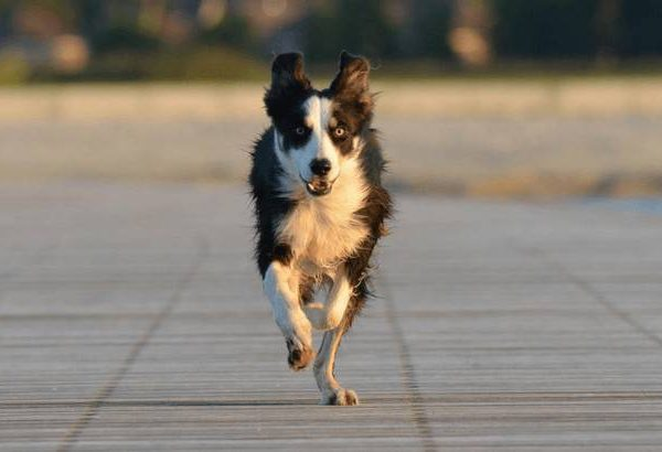 Top 10 Dogs that will Never run away: the most obedient ones