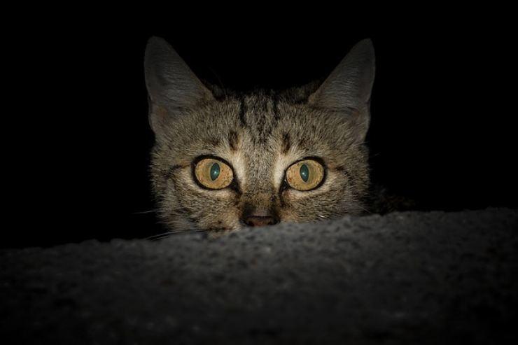 the cat's eyes shine in the dark