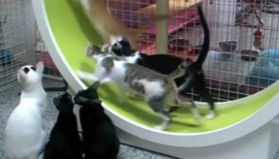 The cats playing on the wheel