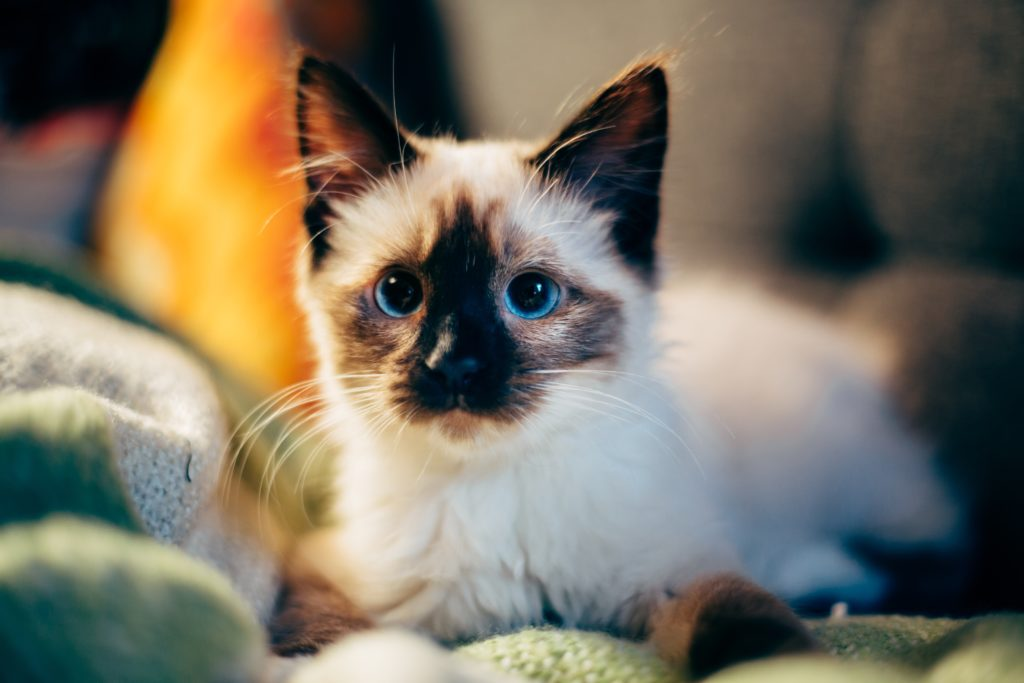 The most common toxins dangerous to cats -