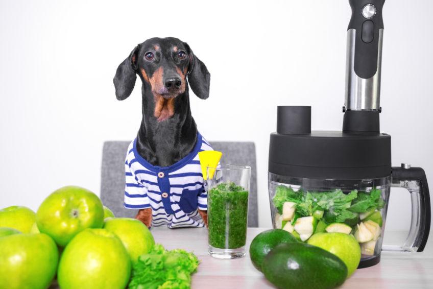 ingredients of dog food
