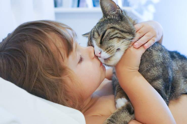 what a cat can teach a child