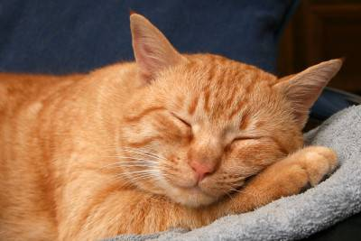 Why and when to sterilize your cat