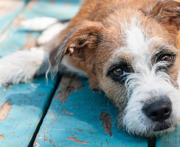 Dog's Urinary Tract – Dangerous Symptoms and Related Diseases