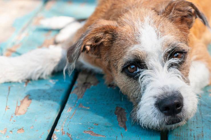 urinary tract dog
