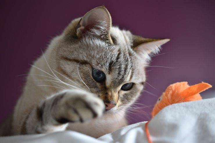 find out how smart your cat is