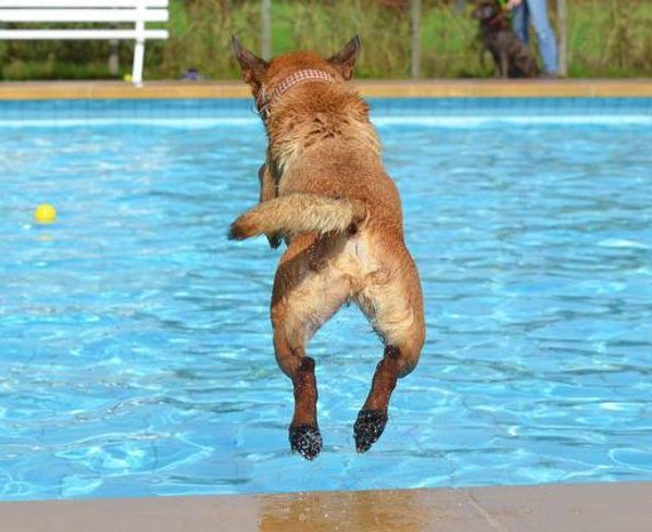 hydrotherapy For dog – Fundamental Exercise for Rehabilitation