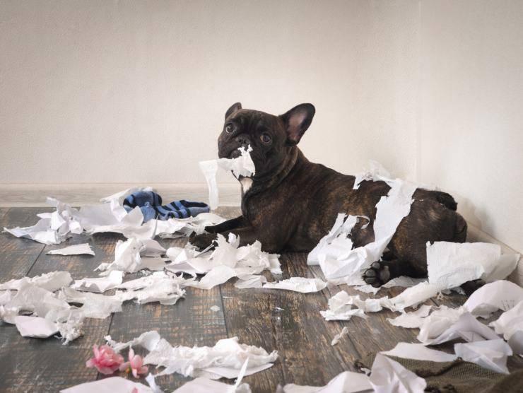 dog eats garbage