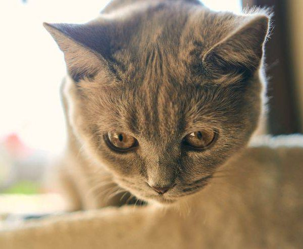 Top 10 signs of diabetes in cats – How to tell (Fast)