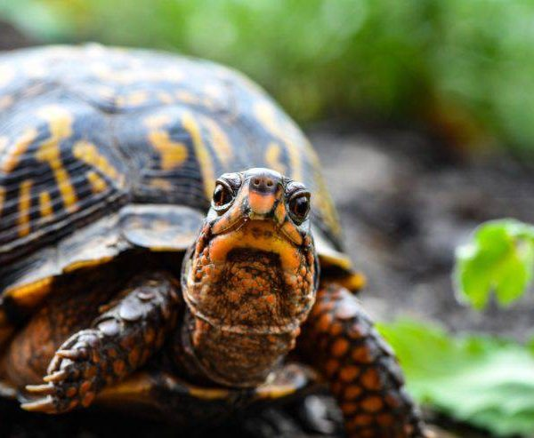 Turtles – what they are and how to avoid them